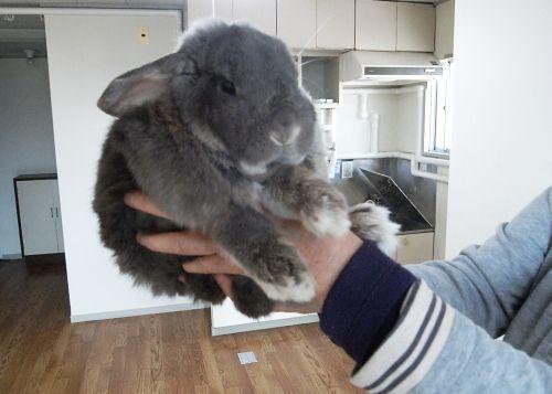 rabbit_01.jpg